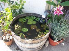 Wine barrel pond