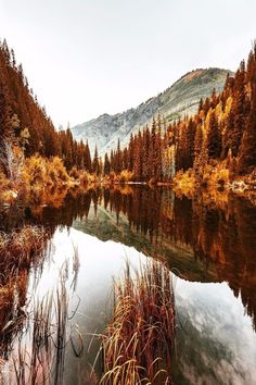 Discovered by Shorena Ratiani. Find images and videos about nature, autumn and fall on We Heart It - the app to get lost in what you love. Fall Pictures, Pretty Pictures, Happy Pictures, Herbst Bucket List, Beautiful World, Beautiful Places, Photo Lovers, Thanksgiving Wallpaper, Happy Thanksgiving