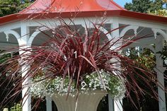Festival Burgundy cordyline and white lobelia (numbered) In this numbered image of a container garden, Festival Burgundy cordyline lends an architectural feel and contrast when planted atop dainty white lobelia. Container Plants, Container Gardening, Plant Containers, Flower Containers, Water Garden, Garden Plants, Garden Spaces, Pennisetum Setaceum, Ornamental Kale
