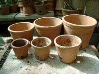 Como plantar orquideas terrestres.   Como eu planto dá certo com as minhas, aqui vai meu estilo.    A primeira casa da plantinha um...