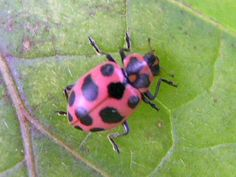 327 best images about Ladybugs on Pinterest | Ladybird insect ...