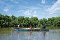 La atarraya, el trasmallo, el boliche y el chinchorro son las artes de pesca más utilizadas en las lagunas costeras y en los estuarios de Colombia.