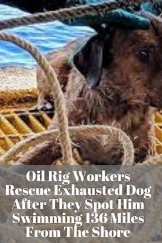 Oil Rig Workers Rescue Exhausted Dog After They Spot Him Swimming 136 Miles From The Shore Funny Cats And Dogs, Big Dogs, Cute Puppy Videos, Pet Videos, Cute Animals, Baby Animals, Funny Animals, Oil Rig, Funny Dog Pictures