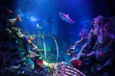 Sea Life Aquarium Phoenix AZ is where we spent Shawn's 11th Birthday 7/10/14.