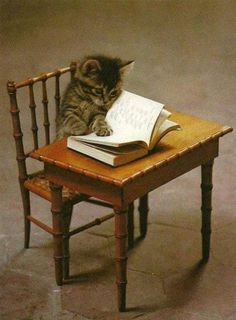 so adorable! kitty reading..