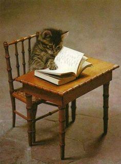 Cats like to read too! Cat. Agóra vocês não me pertuberm porque vou estudar para a prova de amanhã! Cat. Now you do not pertuberm me because I'm studying for the test tomorrow!