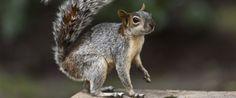 Squirrel Appreciation Day: Don't Miss Celebrating!
