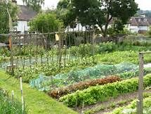 allotments - Yahoo Image Search results