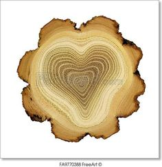 Free art print of Heart of tree - growth rings of acacia tree - cross section. Heart of tree. Modified photo of growth rings of acacia tree - cross section. Theme of love, friendship, secret. Isolated on white background. I Love Heart, With All My Heart, Happy Heart, Love Is All, Your Heart, Humble Heart, Heart In Nature, Heart Art, Cross Section