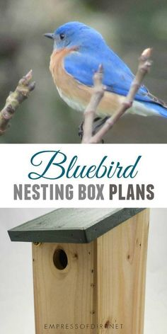 This bluebird nesting box is designed to be attractive to bluebirds, simple in design and construction, easy to monitor, and resistant to inclement weather and predators. Bluebird House Plans, Common Birds, Bird House Kits, Blue Bird House, Bird Houses Diy, Bird Boxes, How To Attract Birds, Nesting Boxes, Backyard Birds