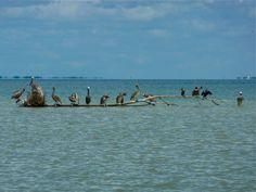 pelican landing strip Landing Strip, Captiva Island