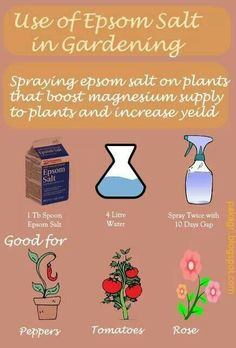 epsom salt on plants boosts magnesium supply to plants and increases yield. Spraying 1 table spoon of epsom salt mix with 4 litre of water twice with 10 days gap could be used for good results. Tomatoes, peppers and rose can benefit extraordinarily Gardening Supplies, Gardening Tips, Gardening Gloves, Kitchen Gardening, Lawn And Garden, Garden Pool, Easy Garden, Edible Garden, Tropical Garden