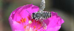 Bee ways  www.inaturalist.org