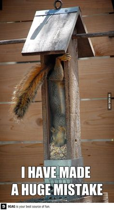 go home squirrel, you're drunk