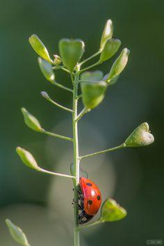 Ladybird More At FOSTERGINGER @ Pinterest ⛵️❤️️