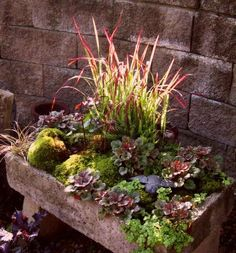 "Nice Hypertufa trough makes great succulent garden- Hypertufa/succulent garden with levels. Maybe build up with concrete blocks - have good drain ""holes"" then cover with hypertufa to conceal the concrete."