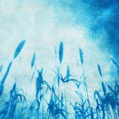 wheat sun print by ashley e howard studio