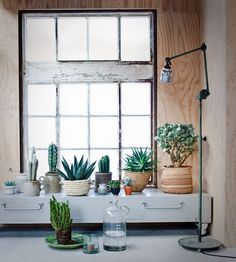 wooden walls / large window / shabby chic furniture / cactus / by lotte james barnes