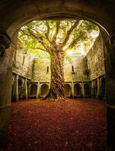 Muckross Abbey Tree of Life by Matt Anderson - Large (Color Photograph) art design landspacing to plant Vila Medieval, Places To Travel, Places To Visit, Abandoned Places, Abandoned Castles, Old Abandoned Buildings, Abandoned Property, Abandoned Homes, Fantasy Landscape