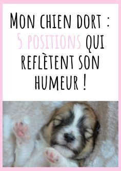 My dog is sleeping: 5 positions that reflect his mood! Brain Training, Training Tips, Chien Shih Tzu, Le Chihuahua, Basset Hound, Cat Gif, I Love Dogs, Dogs And Puppies, Dog Lovers