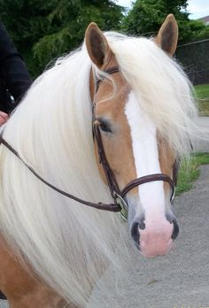 He's a looker! Palomino, a childhood favorite. Probably because of Mister Ed.