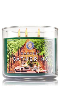 Harvest Gathering 3-Wick Candle - Home Fragrance 1037181 - Bath & Body Works