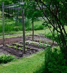 Fagerdala trädgård