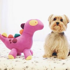 Temno, the purple dinosaur and Spock, the lovely dog  | Temno, o dinossauro roxo e Spock, o cachorro fofo  Melina Souza - A Series of Serendipity <3