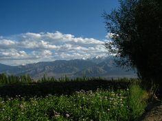 Green Ladakh