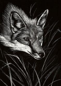 Fox Art | Scratchboard Fox by Culpeo-Fox on deviantART