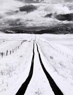 Homeward Bound, Roman Loranc