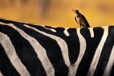 50 of the World's Most Gorgeous Photos of Animals | by Jack Shepherd | Feb, 2021 | Tenderly Photography Contests, Wildlife Photography, Animal Photography, Free Photography, Kruger National Park, National Parks, Animal Intelligence, Herd Of Elephants, Spotted Animals