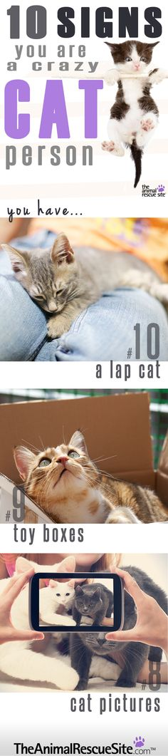 Think you might be a Crazy Cat Person? If any of these 10 signs ring true for you, you may just be a (proud) Crazy Cat Person! Check out awesome Cat Tees at http://presentpuppy.com/cats/
