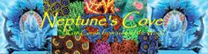 Dallas Fish Store Neptunes Cove, dfw saltwater aquarium fish coral and more store, rare LE corals for sale zoas palys chalice LPS SPS