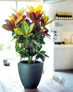The houseplants in this list are special, they are bold and pretty. Some of the … The houseplants in this list are special, they are bold and pretty. Some of the most unique, beautiful indoor plants you should grow! Indoor Tropical Plants, Best Indoor Plants, Outdoor Plants, Indoor Plants In Water, Indoor House Plants, Exotic House Plants, Outdoor Gardens, Flowering House Plants, Indoor Flower Pots