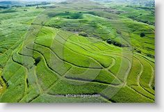 Sugar cane farming -- KZN, South Africa