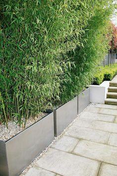Idée haie de bambou en jardinières