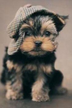 Do you like mi hat???