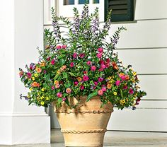Angelonia AngelMist -Purple Stripe,  One plant each Calibrachoa Superbells- Saffron, Calitunia-Purple, Lantana Landmark- Rose Sunrise ; two each of Nemesia Fruticans 'Bluebirds, Six plants total. Full sun.