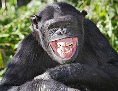 15 Animals Just Having a Laugh. Literally. This Will Brighten Up Your Day! | Cools And Fools