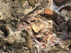 Dinosaur Brain IMG_1849.JPG
