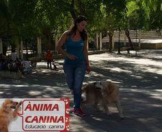 #educacioncanina #dogdancing +animacanina #adiestramiento