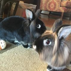 Basil and Clover