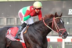 Elbchaussee (PER) 2009 Ch.h. (Awesome Twist (USA)-Ikea (PER) by Combsway (USA) 1st Clasico Enrique Meiggs (PER-G2,2000mD,Monterrico), Clasico La Copa (PER-G2,2200mD,Monterrico)