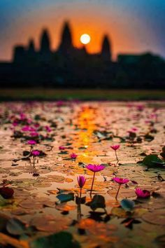 Salida del sol y la flor de loto / Angkor Wat, Siem Reap, Camboya What A Wonderful World, Beautiful World, Beautiful Places, Angkor Wat, Magic Places, Foto Poster, Siem Reap, Belleza Natural, Oh The Places You'll Go