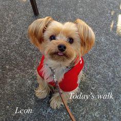 今日は一番暖かい時間帯に娘と一緒に散歩ポカポカでまったりした散歩が出来ました . #dog...