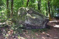 roches et bois - Recherche Google