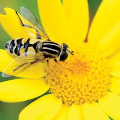 A Glossary of Natural Garden Pest Control Solutions - Organic Gardening - MOTHER EARTH NEWS