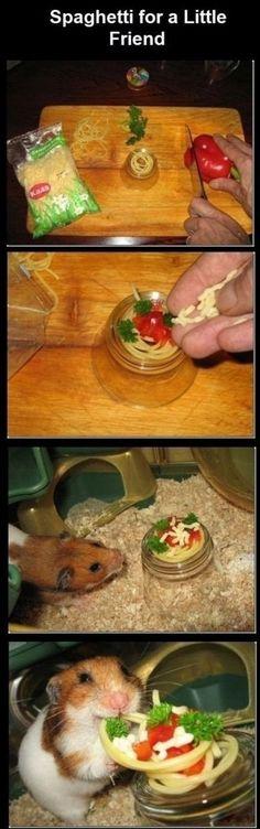 Spaghetti, for a little friend, hamster, cute
