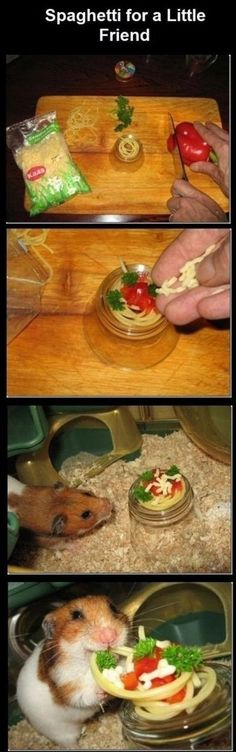 Spaghetti for a hamster...I so want to do this! Let's get a hamster :) I want to spoil it!!!